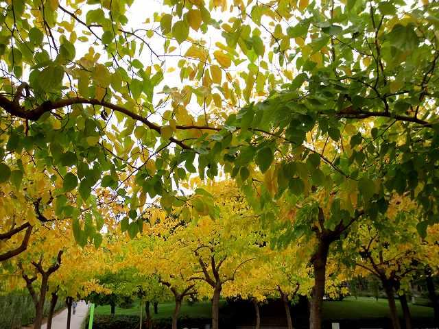 セルバンテス公園の黄_b0064411_05245989.jpg