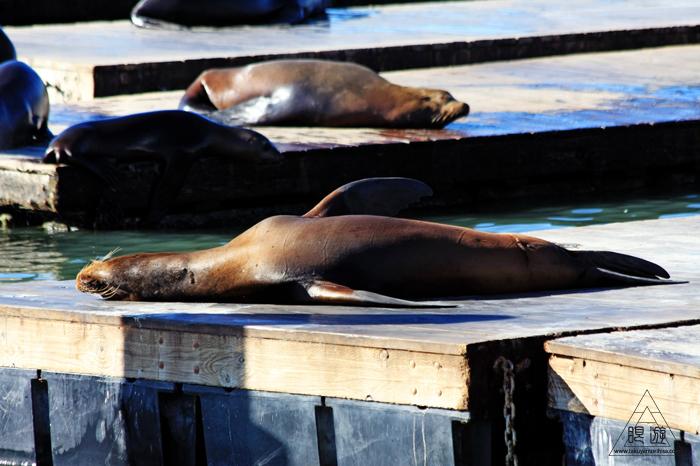 390 Aquarium Of The Bay ~サンフランシスコの水族館~_c0211532_21101337.jpg
