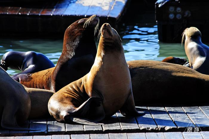 390 Aquarium Of The Bay ~サンフランシスコの水族館~_c0211532_2110195.jpg