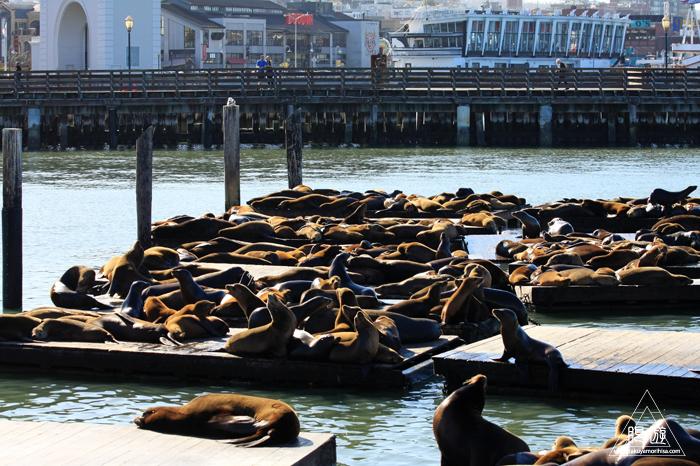 390 Aquarium Of The Bay ~サンフランシスコの水族館~_c0211532_2192140.jpg