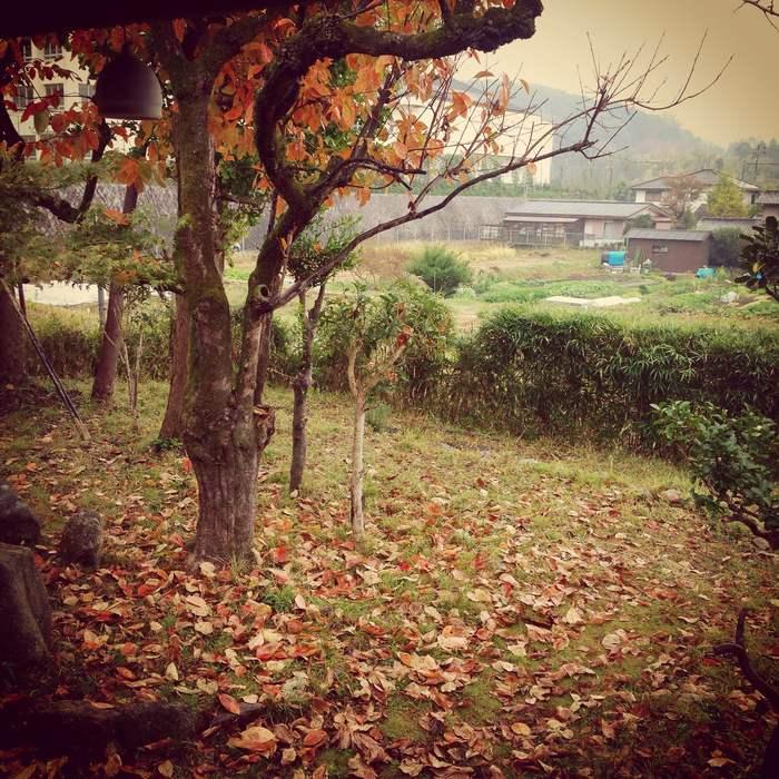 秋雨_d0210537_11231332.jpg