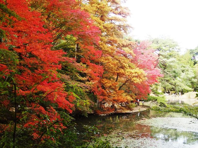 紅葉の神戸市立森林植物園_b0227552_19433016.jpg