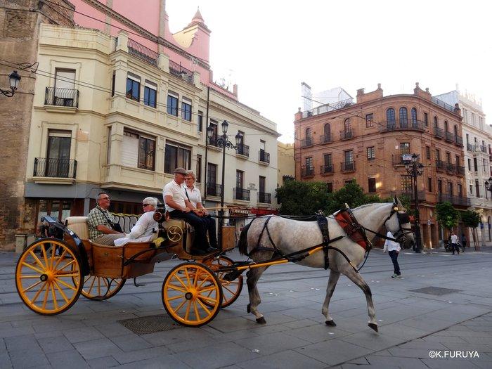 スペイン旅行記 14 セビーリャ (Sevilla)_a0092659_2212167.jpg
