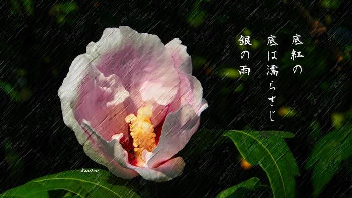 f0053297_1732611.jpg