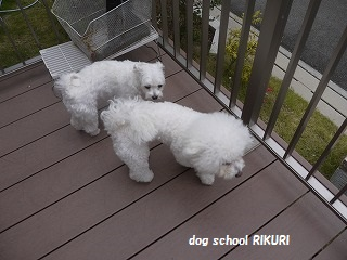 RIKURI幼稚園 - ルカくん編 -_a0284100_10113938.jpg