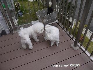 RIKURI幼稚園 - ルカくん編 -_a0284100_10115853.jpg