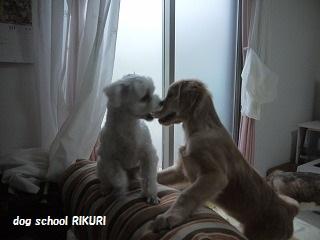 RIKURI幼稚園 - ルカくん編 -_a0284100_1014068.jpg