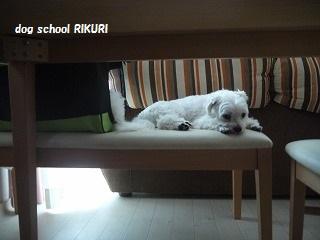 RIKURI幼稚園 - ルカくん編 -_a0284100_10195137.jpg