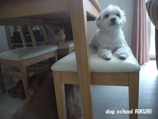 RIKURI幼稚園 - ルカくん編 -_a0284100_10561213.jpg
