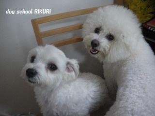 RIKURI幼稚園 - フランちゃん編 -_a0284100_11145056.jpg
