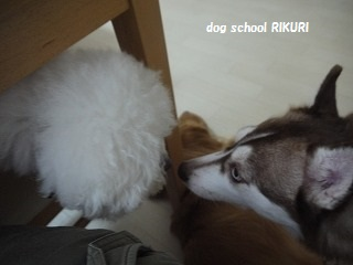 RIKURI幼稚園 - フランちゃん編 -_a0284100_11213345.jpg