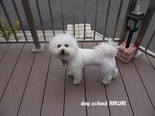 RIKURI幼稚園 - フランちゃん編 -_a0284100_11352849.jpg