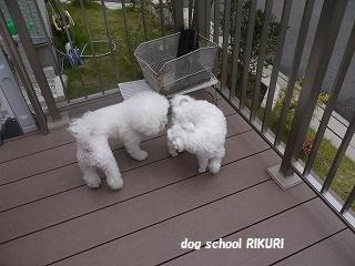 RIKURI幼稚園 - フランちゃん編 -_a0284100_1150508.jpg