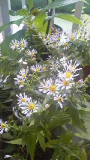 植物の持つ力_c0161301_1313790.jpg