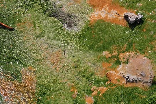 家族旅行2014年08月-北米-イエローストーン・グランドティトン-第五日目-イエローストーン・ノーリスガイザー/マッドボルケーノ_c0153302_18075449.jpg
