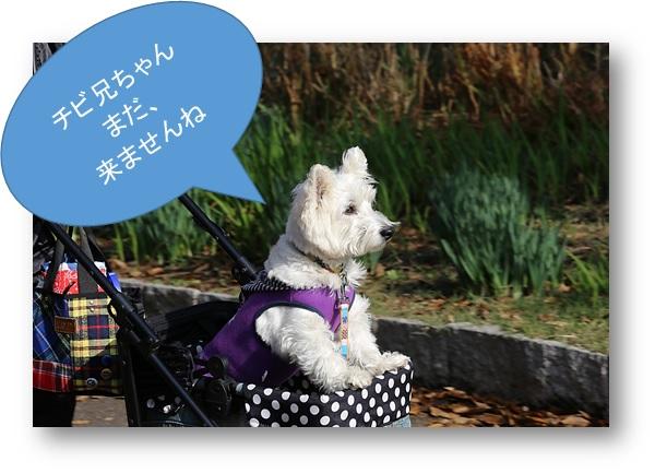 ☆ 駅伝 ☆_a0161111_22221654.jpg