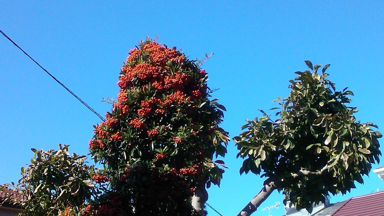 秋の花が青空に...微笑み!_b0137932_1410651.jpg