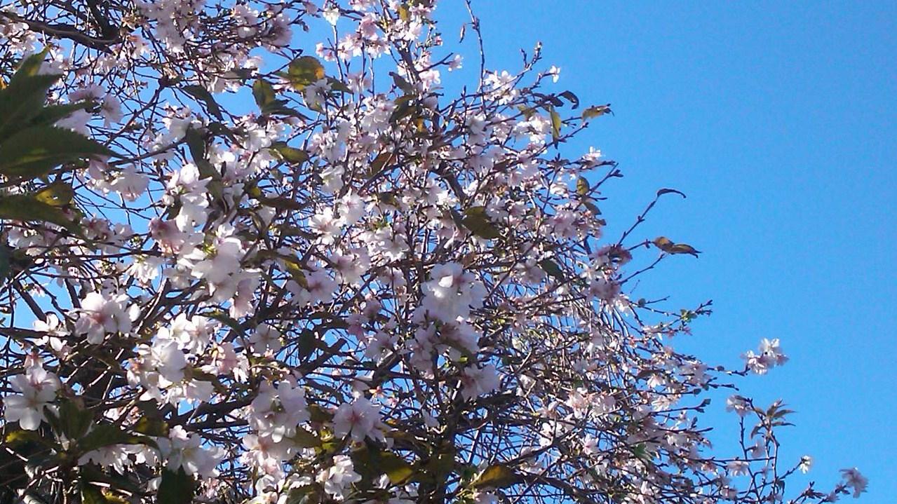 秋の花が青空に...微笑み!_b0137932_14322852.jpg