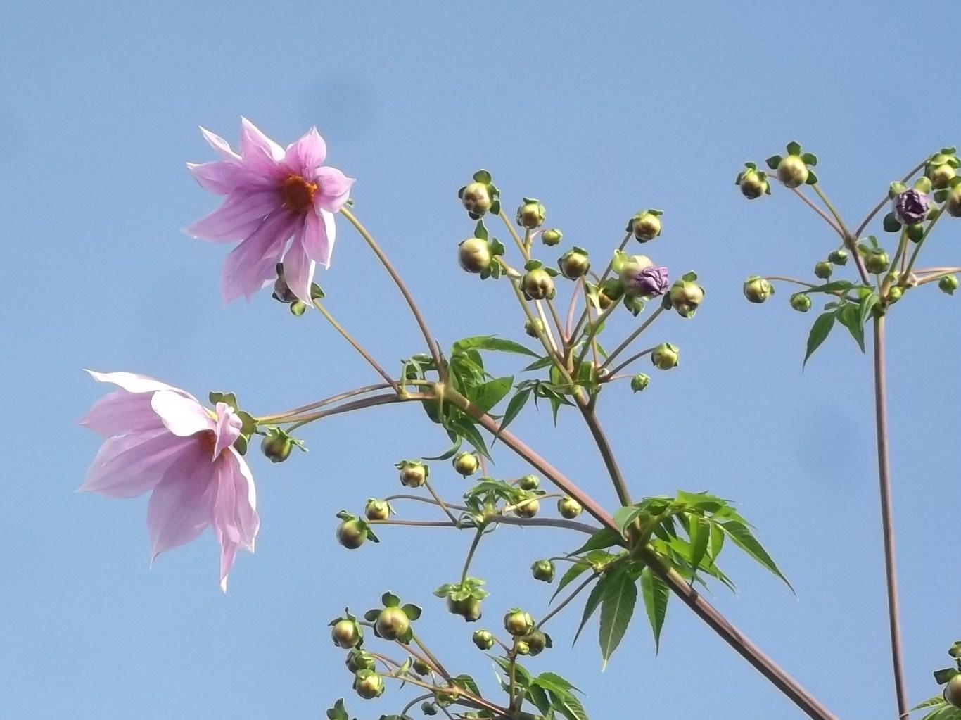 秋の花が青空に...微笑み!_b0137932_1434044.jpg