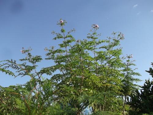 秋の花が青空に...微笑み!_b0137932_1481581.jpg