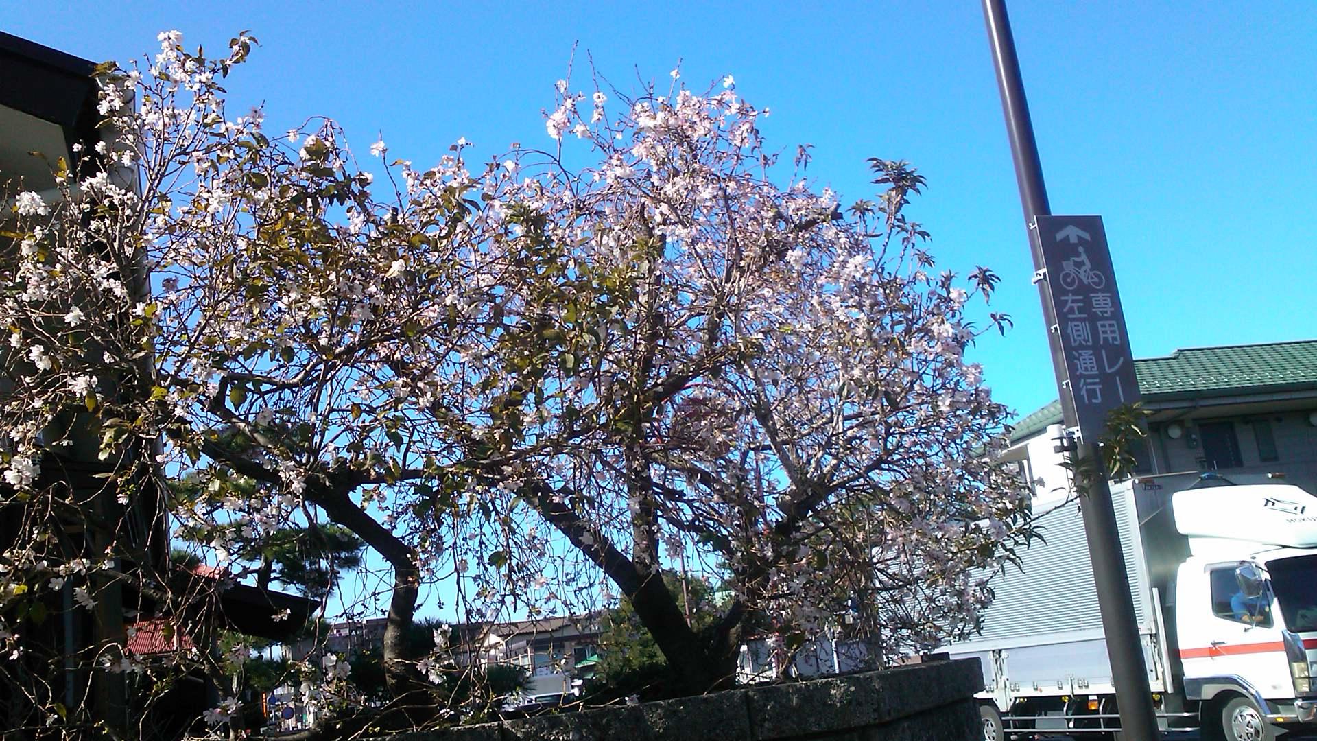 秋の花が青空に...微笑み!_b0137932_1492633.jpg