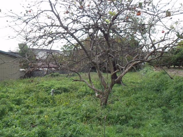 姫路市別所町の畑もできる古民家_f0115152_13391645.jpg