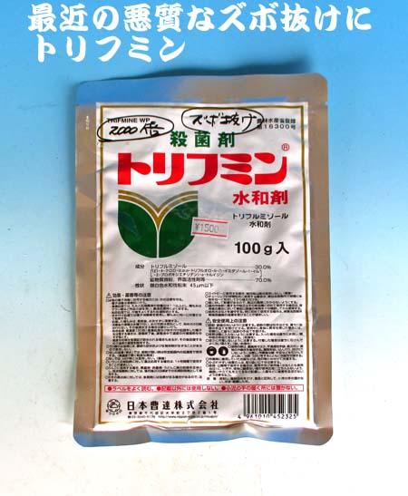 毛虫                            No.1448_d0103457_1426020.jpg