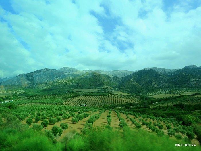 スペイン旅行記 15   白い村  ミハス_a0092659_21175334.jpg
