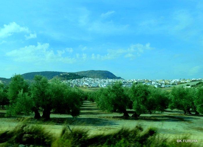 スペイン旅行記 15   白い村  ミハス_a0092659_2342184.jpg