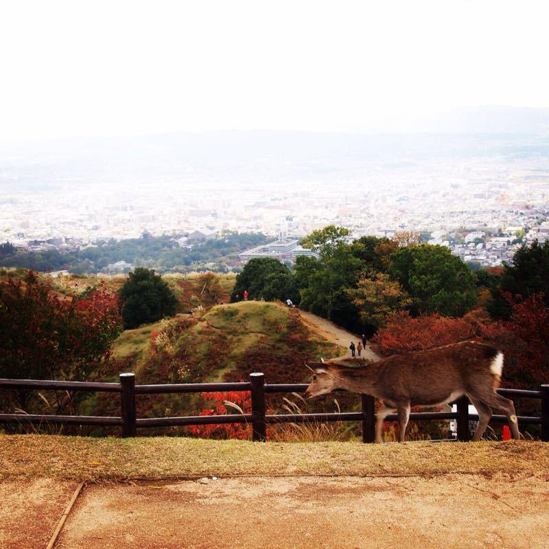 奈良の若草山へハイキング_b0277377_1122258.jpg