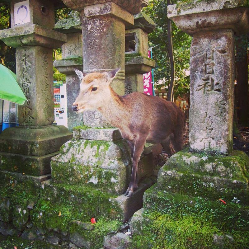 奈良の若草山へハイキング_b0277377_1122889.jpg
