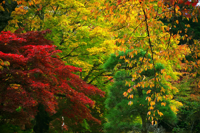 河口湖富士ビューホテルの庭園1_a0263109_14201343.jpg