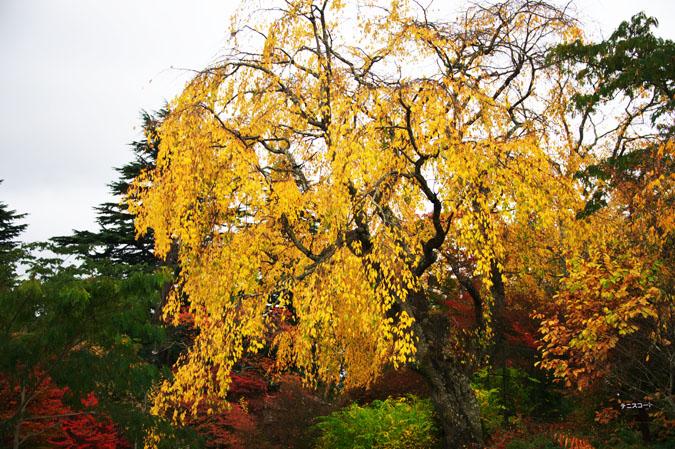 河口湖富士ビューホテルの庭園1_a0263109_14201566.jpg