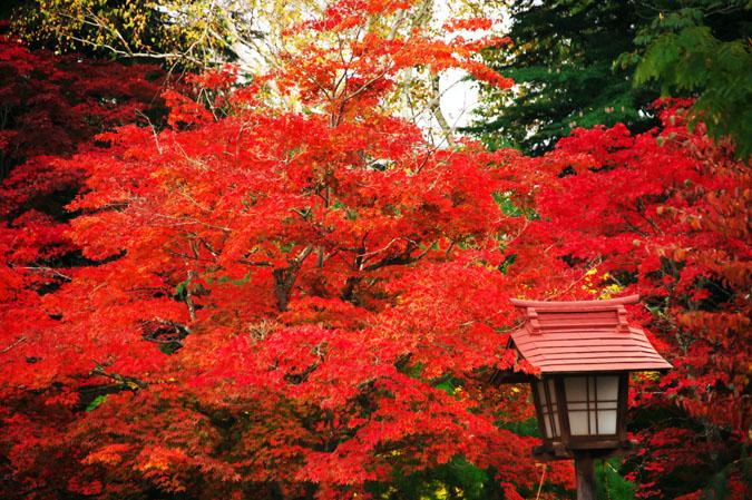 河口湖富士ビューホテルの庭園1_a0263109_14201635.jpg