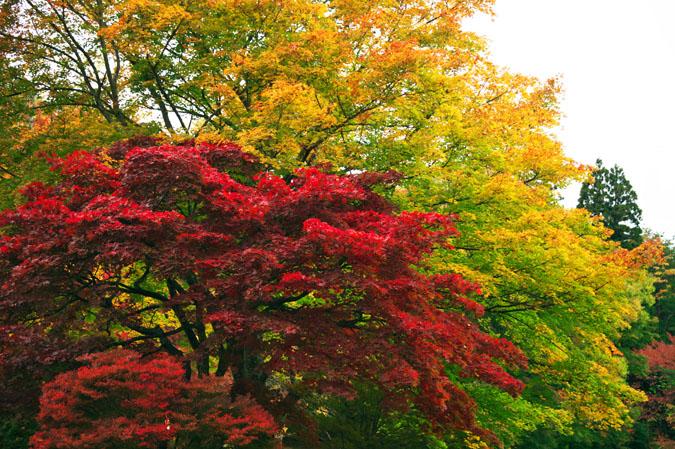 河口湖富士ビューホテルの庭園1_a0263109_14201775.jpg