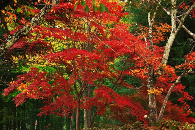 河口湖富士ビューホテルの庭園1_a0263109_14201959.jpg