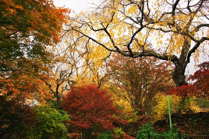 河口湖富士ビューホテルの庭園1_a0263109_14202222.jpg