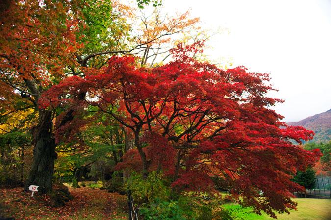 河口湖富士ビューホテルの庭園1_a0263109_14202444.jpg