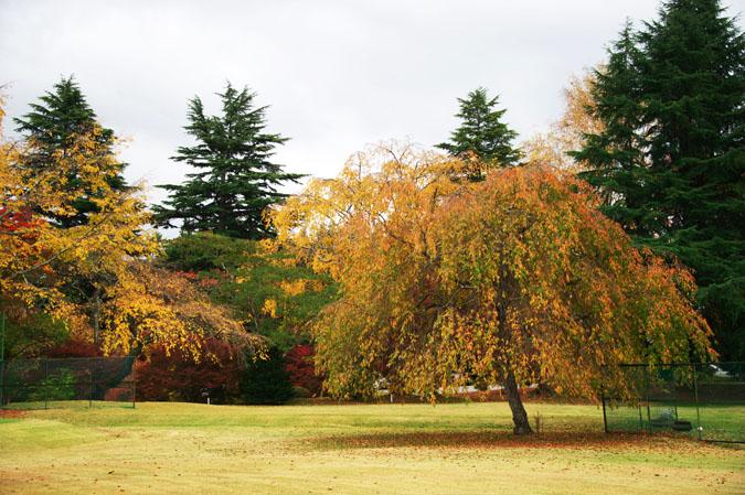 河口湖富士ビューホテルの庭園1_a0263109_14202640.jpg