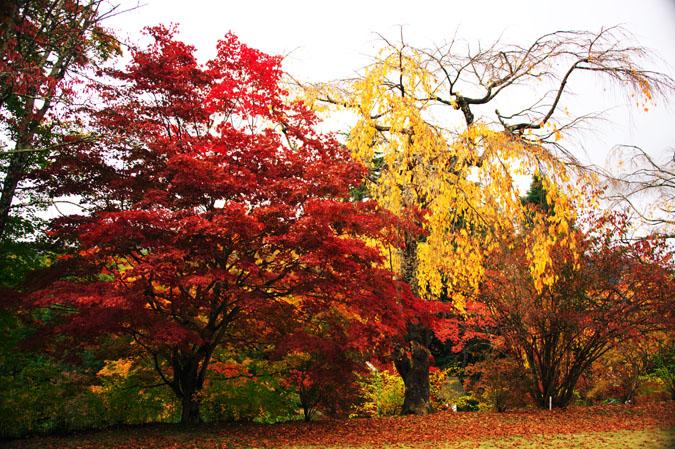 河口湖富士ビューホテルの庭園1_a0263109_14203187.jpg