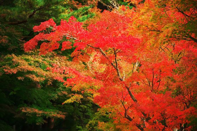 河口湖富士ビューホテルの庭園1_a0263109_1420758.jpg