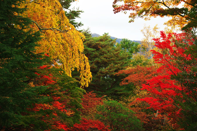 河口湖富士ビューホテルの庭園1_a0263109_1420966.jpg