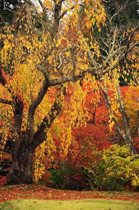 河口湖富士ビューホテルの庭園1_a0263109_14212913.jpg