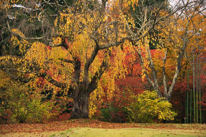 河口湖富士ビューホテルの庭園1_a0263109_14214426.jpg
