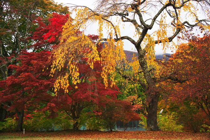 河口湖富士ビューホテルの庭園1_a0263109_1422112.jpg