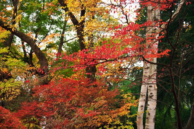河口湖富士ビューホテルの庭園1_a0263109_14222749.jpg