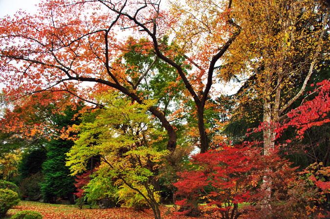 河口湖富士ビューホテルの庭園1_a0263109_14223912.jpg