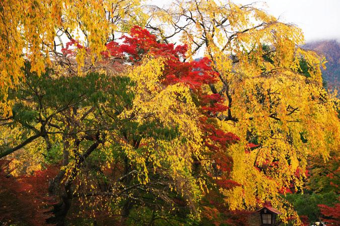 河口湖富士ビューホテルの庭園1_a0263109_14233511.jpg