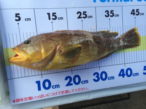 BOAT GAME FISHING 2014 in 高知 太平洋マリン カップ開催!_a0132631_03015579.jpg