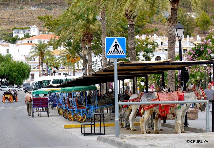 スペイン旅行記 15   白い村  ミハス_a0092659_0313532.jpg